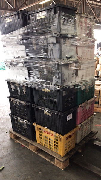 A wholesaler wanted to give us 24 crates of unwanted bak choy (chinese cabbage)